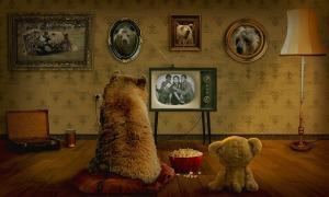 bear-3145874_640